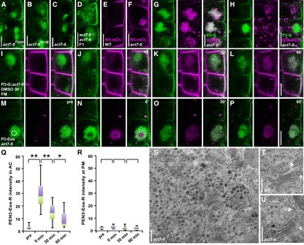 A Framework for Lateral Membrane Trafficking and Polar Tethering of the PEN3 ATP-Binding Cassette Transporter | Cereal and Biotrophic Pathogens | Scoop.it