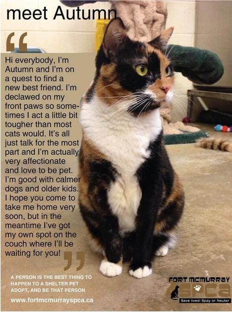 Twitter / FMSPCA: Hi my name is AUTUMN and I ...   Conscious Parenting   Scoop.it