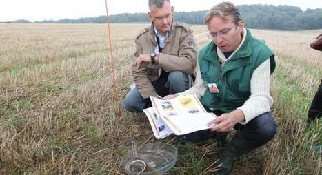 Ces insectes adjoints des agriculteurs   Agroécologie   Scoop.it