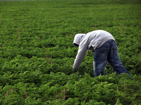 Organic farms' need for more land is bad for Earth: study   Chemistry and Our World   Scoop.it