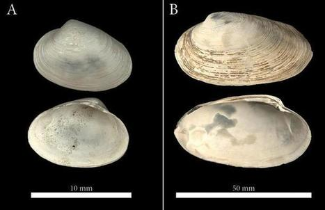 Clams help date duration of ancient methane seeps in the Arctic   Gaia Diary   Scoop.it