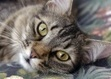 10 ways your cat shows you love | cats & dogs! | Scoop.it