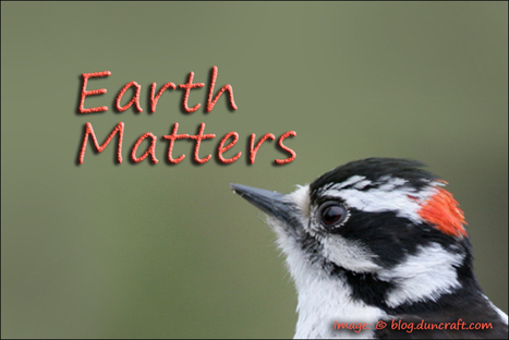 Earth Matters by Jacqueline Milner – Wild Bird Care Centre - December 6, 2012 - Cornwall Free News | The Best Care Products For Your Pet Birds | Scoop.it
