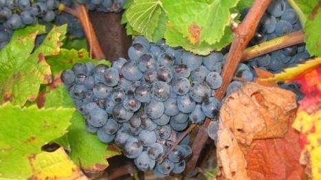 Agenda des principaux évènements de la filière viticole - Viti-net.com | Stratégie, Marketing et E-marketing du vin | Scoop.it