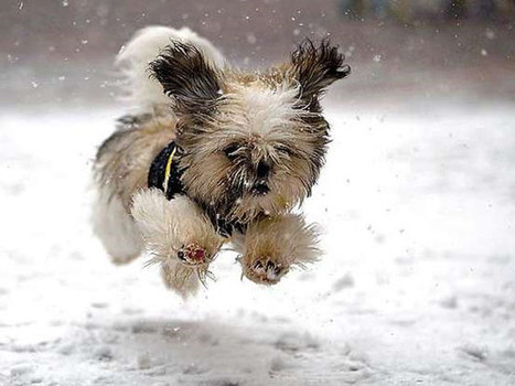 Winter Pet Care Hits and Tips | Groomers News | Grooming Dogs | Scoop.it