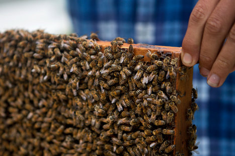 Worker Bees on a Rooftop, Ignoring Urban Pleasures | Arrival Cities | Scoop.it