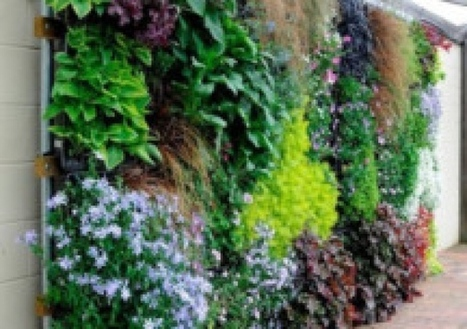 Popularity of vertical gardens on the up - Scotsman | Vertical Farm - Food Factory | Scoop.it