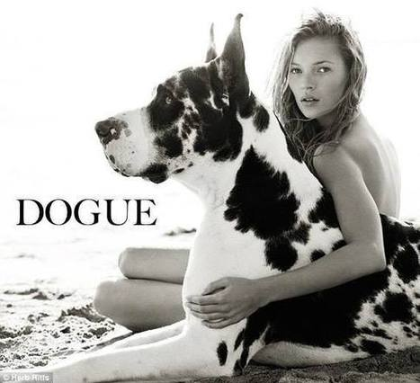 DOGUE - Timeline Photos | Facebook | CaniCatNews-photos-chats-chiens | Scoop.it