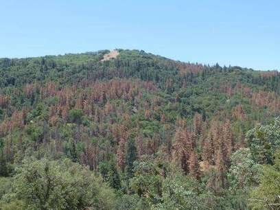 New report assesses impacts of drought on US forests | GarryRogers Biosphere News | Scoop.it