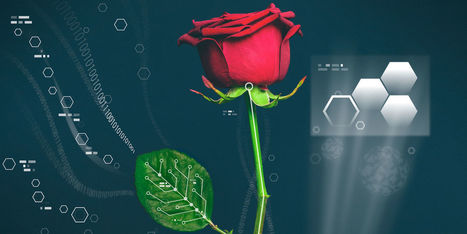 Electrified Plants: Scientists Just Grew Conductive Wires Inside Real Roses | Amazing Science | Scoop.it