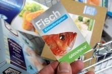Grünes Gewissen - diesen Fisch dürfen Sie essen - DIE WELT | rezepte | Scoop.it