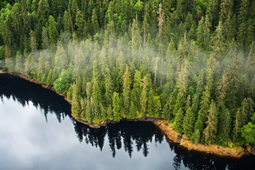 Federal court shuts Tongass national forest roadless loophole | Farming, Forests, Water & Fishing (No Petroleum Added) | Scoop.it