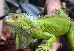 Common Diseases and Health Issues of Reptiles | Pet News ... | Pet News | Scoop.it