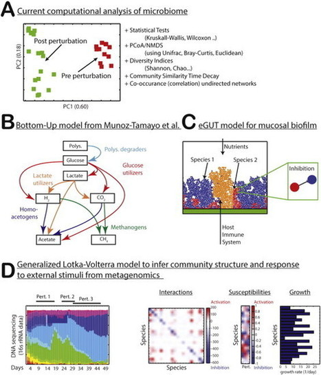 Towards predictive models of the human gut microbiome | Systems biology and bioinformatics | Scoop.it