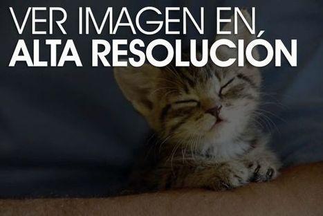 ¿Los gatos nos ignoran? | Web-On! Curiosidades | Scoop.it