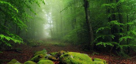 ¿Qué son las emociones? | ecología y felicidad | Scoop.it