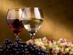Possibly the 10 best wines from Le Marche!! | Wines and People | Scoop.it