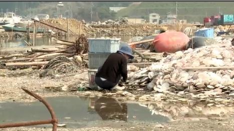 [vidéo] Après le tsunami, marée haute sur Watanoha | Japon Information | Japon : séisme, tsunami & conséquences | Scoop.it
