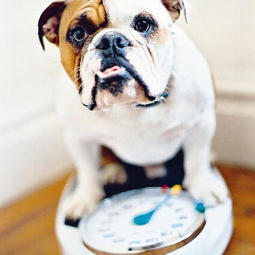 Pet Project: Can diet foods keep your four-legged friend fit? | REAL World Wellness | Scoop.it