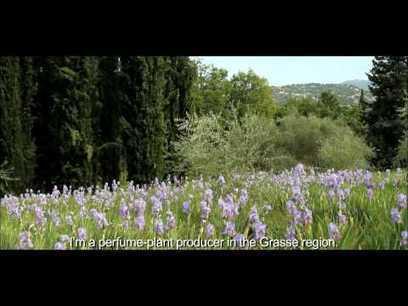 Présentation des Fleurs d'Exception du Pays de Grasse | Pays de Grasse | Scoop.it