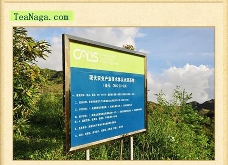 Why buy wholesale Tea from TeaNaga? | Black Tea | Scoop.it