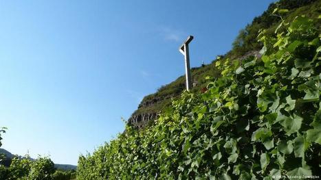 Pilze und Fäule: Öko-Weinbauern leiden besonders unter dem Klimawandel | Wissen & Umwelt | DW.COM | 22.08.2016 | Agrarforschung | Scoop.it