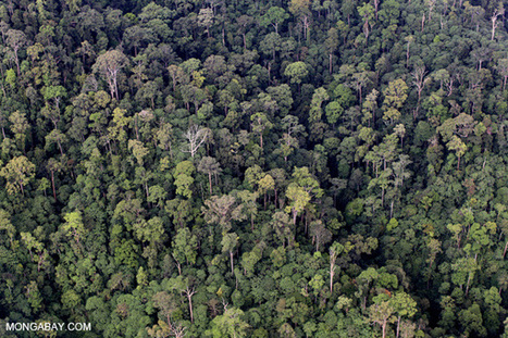 Borneo bests Amazon in terms of giant tree growth rates | Forest | Scoop.it