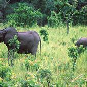 La disparition de la grande faune africaine n'est pas une fatalité pour la biodiversité | Les espèces menacées de la biodiversité | Scoop.it