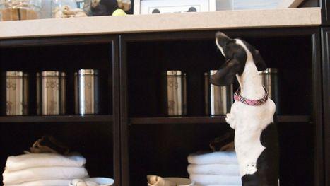 Pets' amenities rising trend for homebuilders - Poughkeepsie Journal | Dogs | Scoop.it