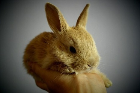 China Ends Animal Testing on Some 'Ordinary' Cosmetics - Nature World News | Animals R Us | Scoop.it