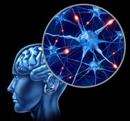 Neurosciences et apprentissages | Thot Cursus | The living mind | Scoop.it