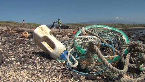 Japanese tsunami debris makes its way into Hawaiian birds -- CNN VIDEO   OUR OCEANS NEED US   Scoop.it
