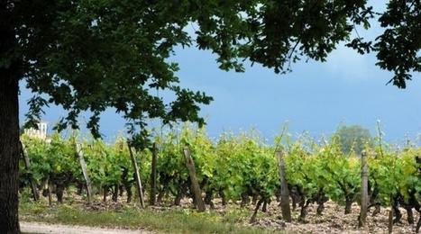 Lancement d'un plan pour réduire l'usage des pesticides dans le vignoble bordelais | Le vin quotidien | Scoop.it