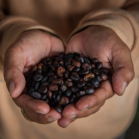 India to celebrate international coffee festival at Bangalore   Curating Mode !   Scoop.it