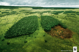 Earth's second lung has emphysema | GarryRogers Biosphere News | Scoop.it
