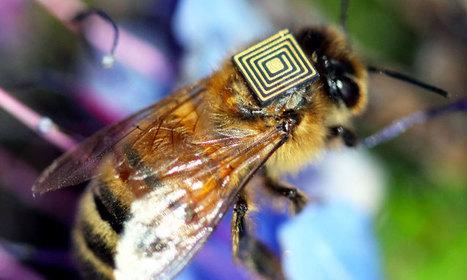 Première mondiale : des scientifiques équipent des milliers d'abeilles de capteurs électroniques   (Culture)s (Urbaine)s   Scoop.it