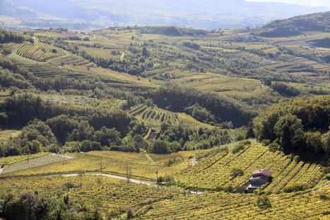 Regione del Veneto - IL TERZO INCONTRO MONDIALE SUI PAESAGGI TERRAZZATI A OTTOBRE NEL VENETO | Urbanistica e Paesaggio | Scoop.it
