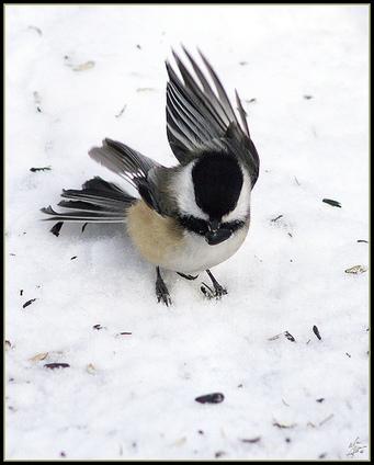 Bien nourrir les oiseaux en hiver par la LPO | (Culture)s (Urbaine)s | Scoop.it