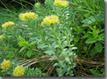 Hippocratus - Bulletin d'information en phyto-aromathérapie   Médecine douce   Scoop.it