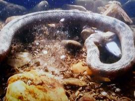BIOLOGIA MARINA Y TERRESTRE | Biología marina y sus curiosidades | Scoop.it