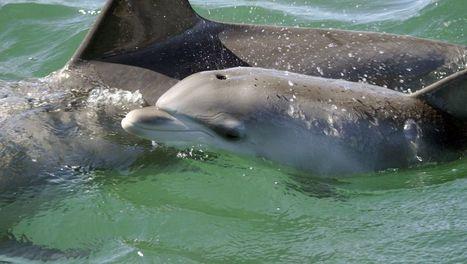 Les bébés dauphins de Shark Bay   ARTE   Alter Tierra: Agroécologie & Agriculture   Scoop.it