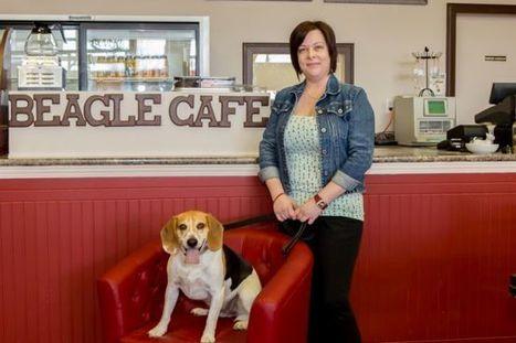 """Beagle café"" : un café canin ouvre au Québec   Beagle   Scoop.it"