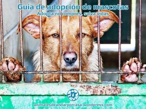 Guía de adopción de mascotas. | Enriquecimiento ambiental en animales en cautividad y mascotas. | Scoop.it