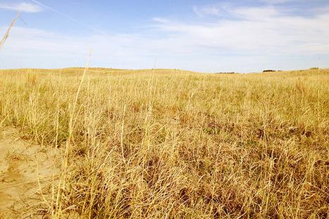 "Bold Nebraska Declares Keystone XL ""Reroute"" Unacceptable | Keystone XL: Affairs of State | Scoop.it"