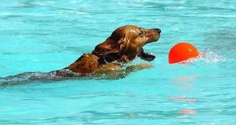 La première piscine pour chiens ouvre ses portes en Espagne - Wamiz | Loisirs | Scoop.it