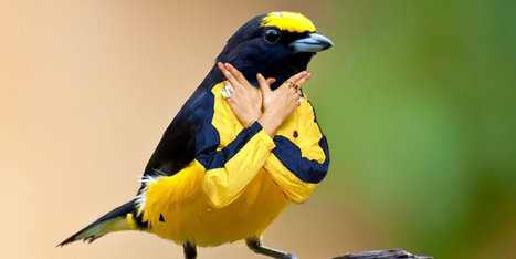 Nope, Birds Should Not Have Human Arms | Strange days indeed... | Scoop.it