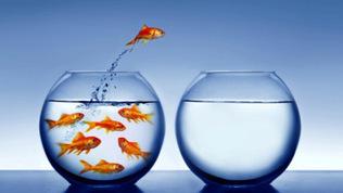 Le management et l'intelligence émotionnelle | Nouvelle Trace | Scoop.it