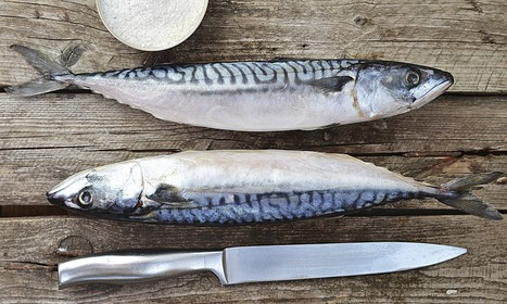 Russian food embargo leaves Europe with glut of fruit, pork and mackerel   AS Economics Markets and market failure   Scoop.it