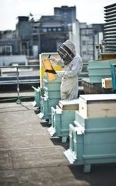 How London's honeybees are spearheading the fightback against the Asian hornet  | Organic Farming | Scoop.it