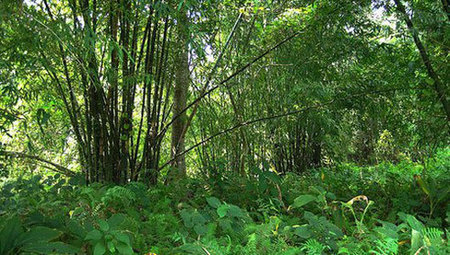 Indian man single-handedly plants a 1,360-acre forest | Arrival Cities | Scoop.it